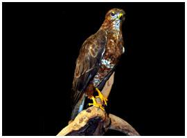 Bird mount 03
