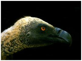 Bird mount 04