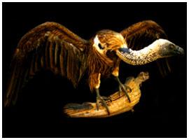 Bird mount 05