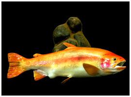Fish mount 03